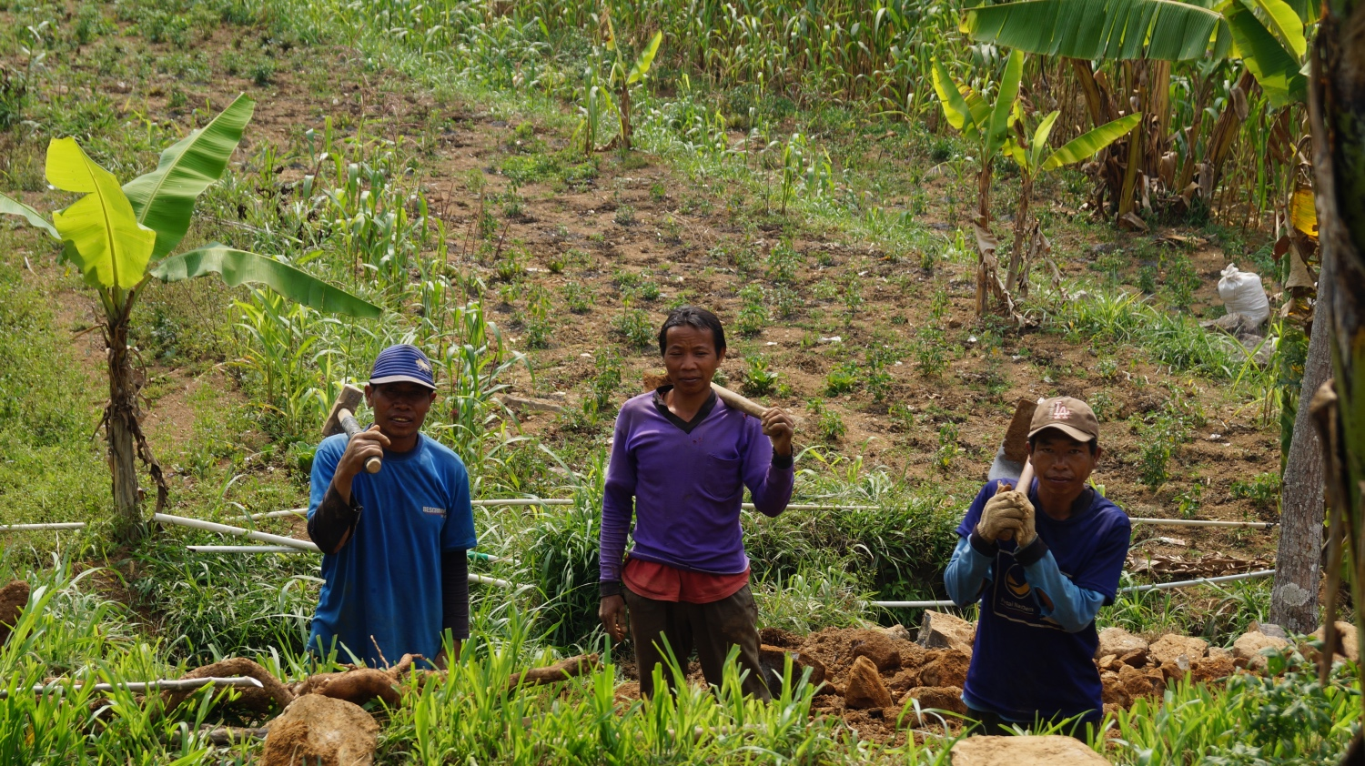Farmers at Gondang village in Central Java.