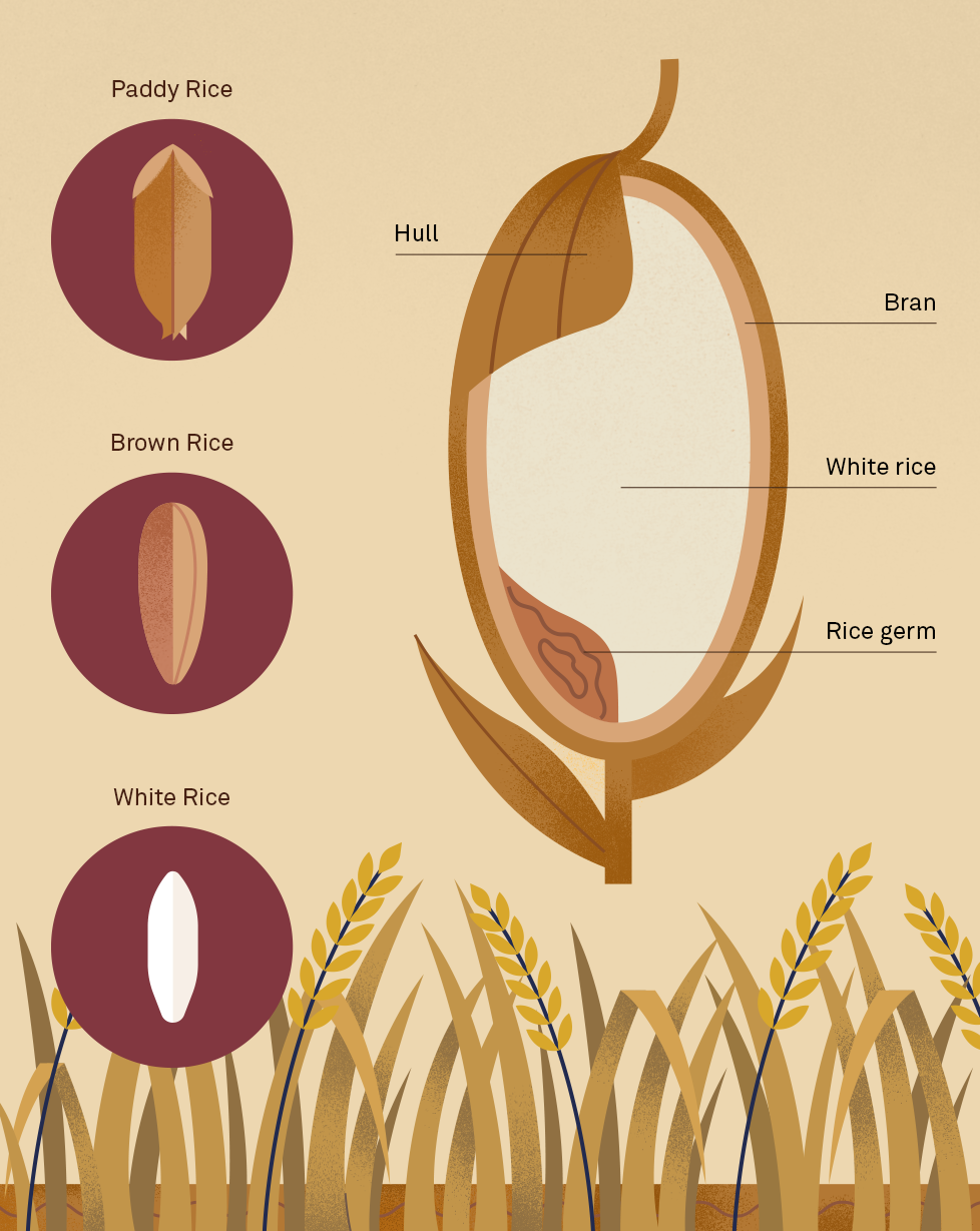How does rice get to your plate?