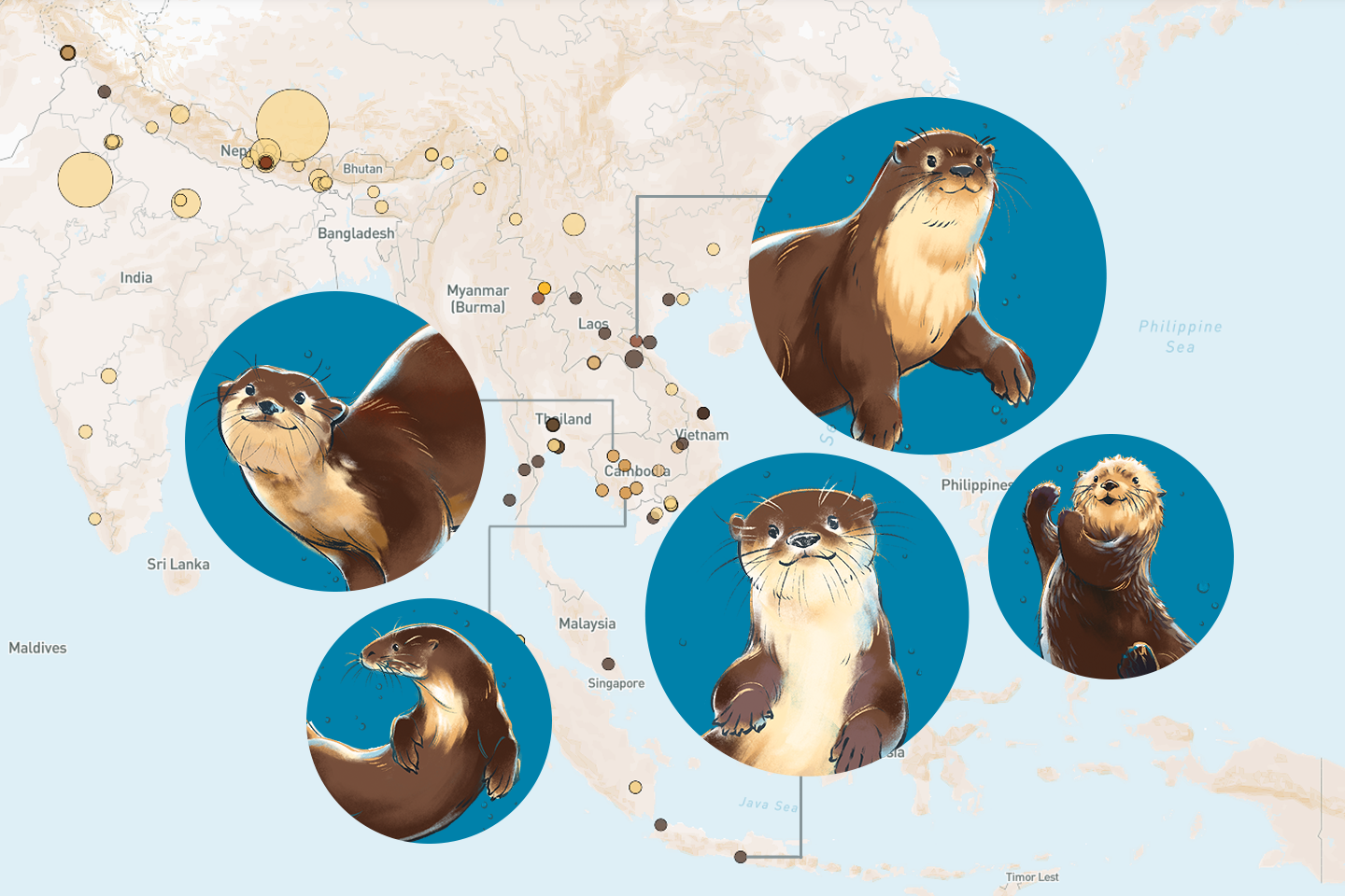 Wild Otters: Threatened and traded